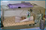 Brooder with bedding
