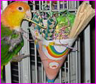 Candy enjoying her party hat!