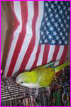 Chester P. Featherbutt for President ob da US ob A