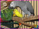 Dinky & Gaby Love Their Greens!