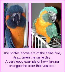 These photos are of the same bird, taken the same day.