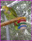 Lucky Parrot Sanctuary
